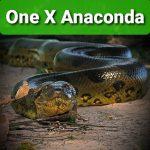 Profilbild von One-X-Anaconda