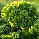 Profilbild von greenkohl23